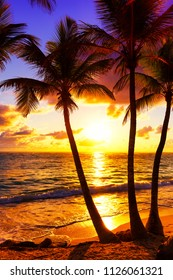 Coconut palm trees against colorful sunset. Dark silhouettes of palm trees and beautiful cloudy sky at tropical island.