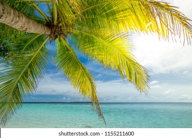 Coconut palm trees at beautiful beach and blue sky