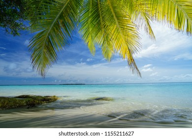 Coconut palm trees and beautiful beach in Maldives
