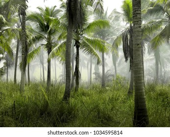Coconut palm trees, beautiful tropical background,