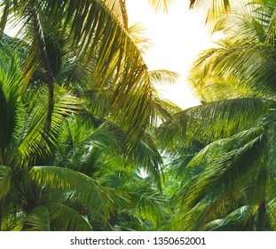 Palme Wallpaper Images Stock Photos Vectors Shutterstock