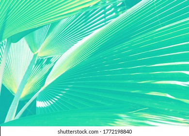 Coconut palm trees beautiful tropical background. Summer concept. Africa, island Zanzibar. Abstract striped natural background.