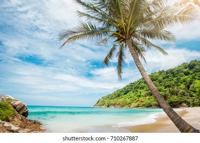 Coconut palm trees, beautiful tropical background, vintage filter