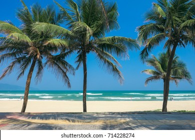 Coconut palm trees at the China Beach, DaNang, Vietnam.