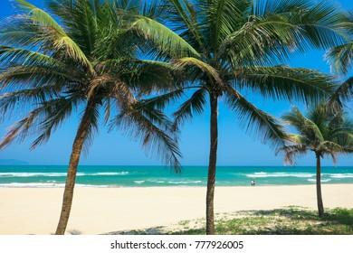 Coconut palm trees at the China Beach, DaNang, Vietnam.
