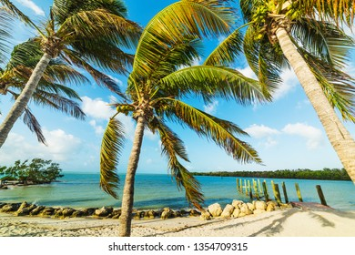 Coconut palm trees in famous Sombrero Beach. Marathon Key, USA