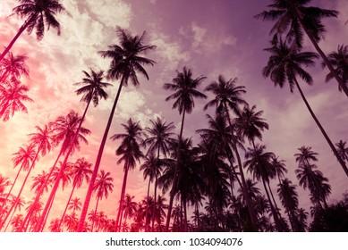 Coconut palm trees farm in Koh Mak island Thailand - Light leak effect summer holiday