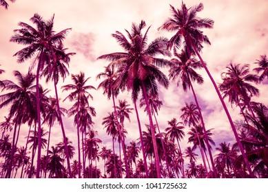 Coconut palm trees farm in Koh Mak island Thailand summer holiday - Violet tone