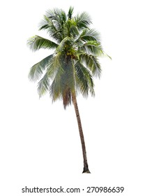 coconut palm trees isolated on white background