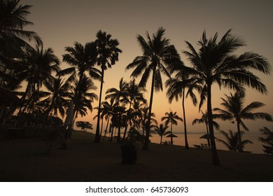 The coconut palm trees at the National park somewhere in Thailand, sun rise