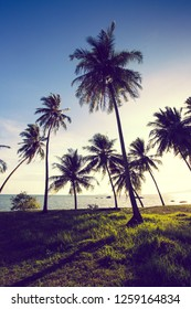 coconut palm trees on the beach and beautiful sunset,sunlight.vintage colour style.