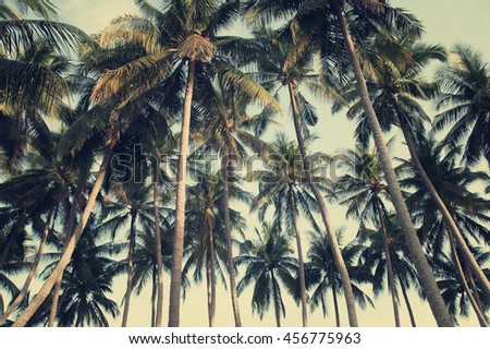 coconut-palm-trees-on-blue-450w-45677596
