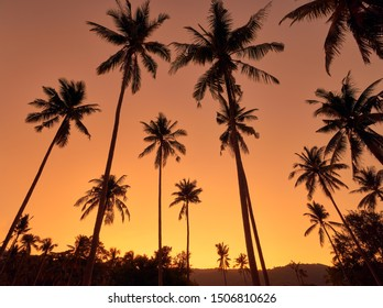 Coconut palm trees on a colourful sunset background