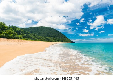 Coconut palm trees on a Pearl beach near village of Deshaies, Guadeloupe, Caribbean