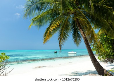 Coconut palm trees on seaside, tropical nature with bounty beach and azure sea, travel destinations.