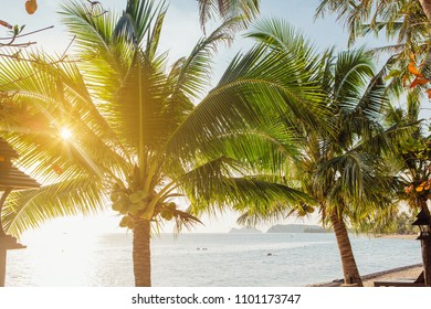 Coconut palm trees on the tropical beach