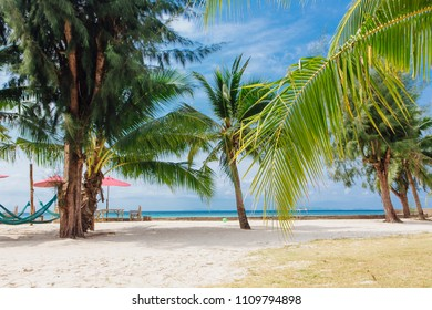 Coconut palm trees on a tropical beach with beautiful sea view.