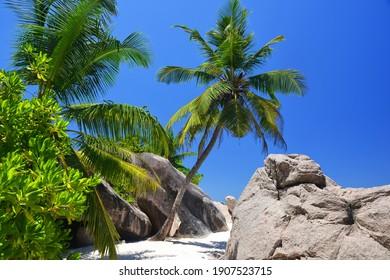 Coconut palm trees on tropical beach Anse Source d'Argent, La Digue Island, Indian Ocean, Seychelles. Exotic destination.