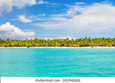 Coconut Palm trees on white sandy beach in Saona island, Dominican Republic. Vacation holidays background wallpaper. View of nice tropical beach.