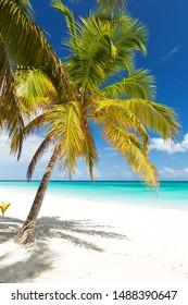 Coconut palm trees on white sandy beach on caribbean island. Vacation holidays summer background