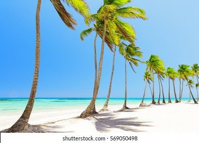 Coconut Palm trees on white sandy beach in Cap Cana, Dominican Republic