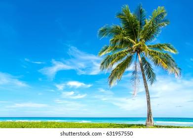 Coconut Palm trees on white sandy beach.