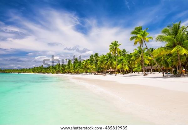 Kokospalmen am weißen Sandstrand von Punta Cana, Dominikanische Republik