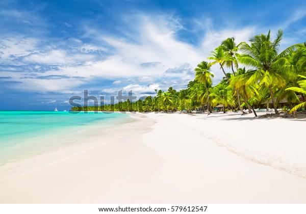 Kokospalmen am weißen Sandstrand im karibischen Meer, Insel Saona. Dominikanische Republik