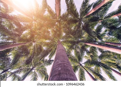 Coconut palm trees perspective view in a tropical island