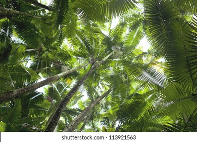 Coconut palm trees perspective view from floor high up