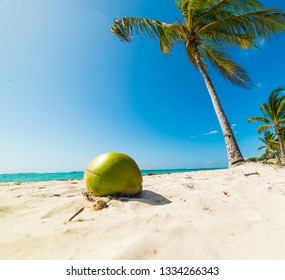 Coconut and palm trees in Raisins Clairs beach in Guadeloupe, French west indies. Lesser Antilles, Caribbean sea