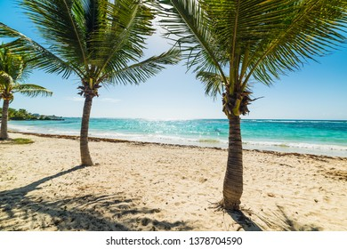 Coconut palm trees in Raisins Clairs beach in Guadeloupe, French west indies. Lesser Antilles, Caribbean sea