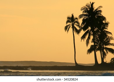Coconut palm trees silhouetted against orange sunset