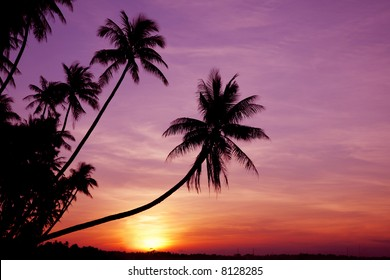 Coconut palm trees silhouetted against the sunset
