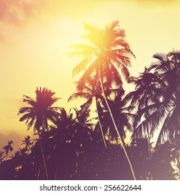 Coconut palm trees at sunset. Tropical beach background. Instagram effect (vintage).