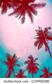 Coconut palm trees - Tropical summer breeze holiday, Color tone effect
