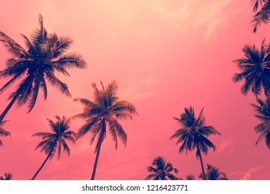 Coconut palm trees - Tropical summer beach holiday, Color fun tone