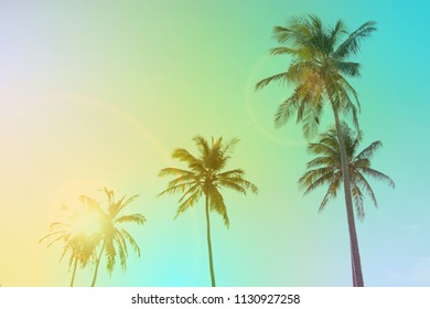 Coconut palm trees. Vintage toned