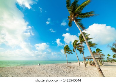 Coconut palm trees and white sand in Sombrero Beach in Florida Keys, USA