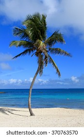 Coconut palm in a white sand beach and blue caribbean sea in Bahamas