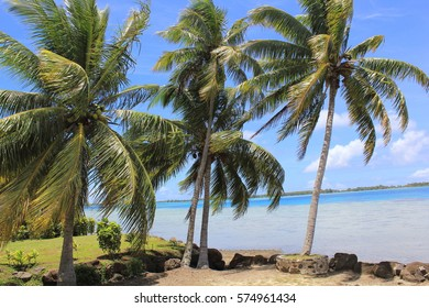 Coconut Palms Along the Coast in Bora Bora
