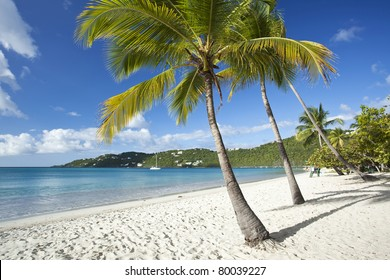 Coconut palms along Magens Bay beach on St. Thomas in US Virgin Islands