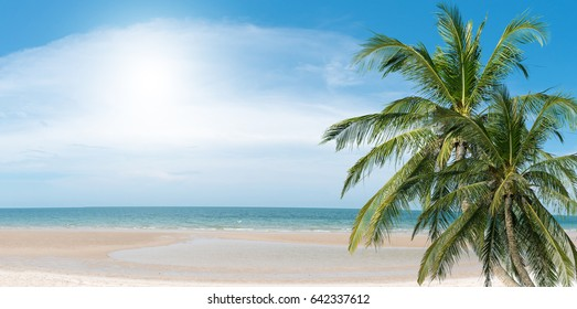 Coconut palms on the beach against the background of the sea. Space for your message.