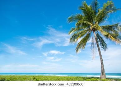 Coconut palms on the beach and blue sky.