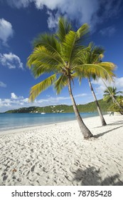 Coconut palms on Magens Bay beach on St. Thomas in US Virgin Islands