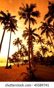 Coconut palms on sand beach in tropic on sunset. Thailand, Koh Chang, Kai Bae beach