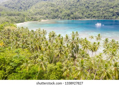 Coconut palms thrive on the island of New Ireland in Papua New Guinea. This remote, tropical area is part of the Coral Triangle due to its high marine biodiversity.