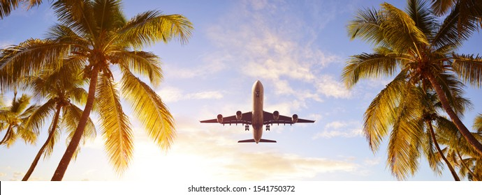 Coconut palms tree and airplane at sunset. Passenger plane above tropical island. Tropical holidays concept.