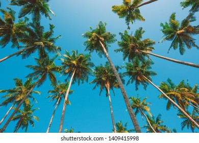 Coconut palms tropical forest ob the beach
