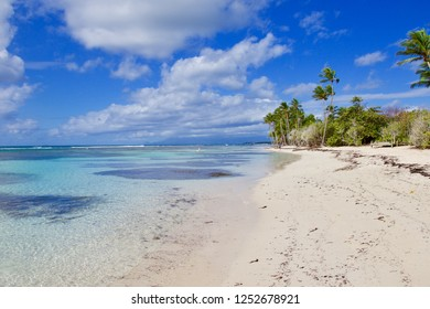 Coconut palms, turquoise sea and white sandy beach of Sainte-Anne Guadeloupe, Antilles